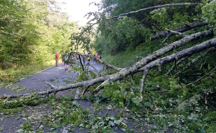 Corte en la carretera a los Lagos tras caer un árbol