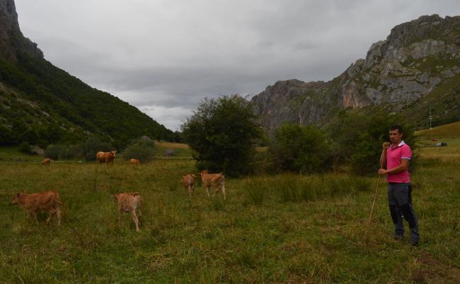 Un ganadero denuncia que sus vecinos le esconden las vacas para echarle de Valle de Lago