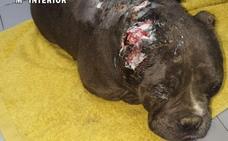 Investigan a un criador de perros de Mieres por maltrato animal y abandono