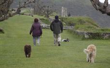 Foro propone una tasa anual de hasta diez euros para los dueños de perros