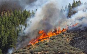 Logran contener el incendio de Gran Canaria pero se esperan vientos de hasta 70 kilómetros por hora