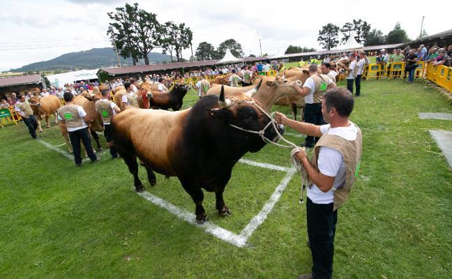 Llanera presume de ganaderías