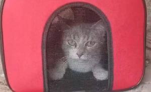 Abandonan a un gato en su transportín bajo un tendejón en Olloniego