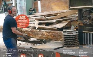 El sector maderero urge al Principado a unificar en una ley las 72 normativas locales de montes