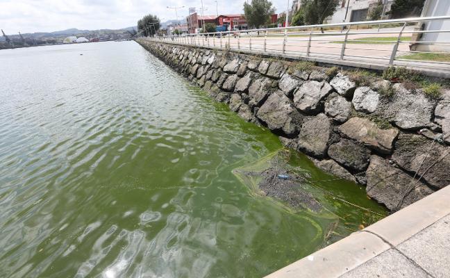 Las aguas de la ría se tiñen de verde por la presencia de algas