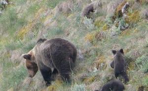 Limitan el acceso al parque de Somiedo para evitar que los turistas molesten a los osos