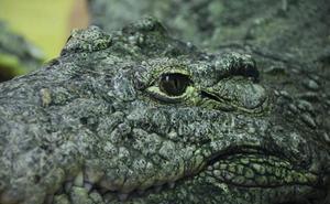 Un cocodrilo devora a un niño de diez años delante de sus hermanos