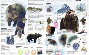 Si te cruzas en el camino de un oso