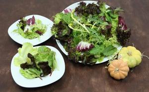 Las mejores variedades de lechuga para ensalada