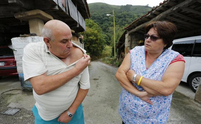 Un vecino de Fano, ingresado tras un ataque de avispas asiáticas