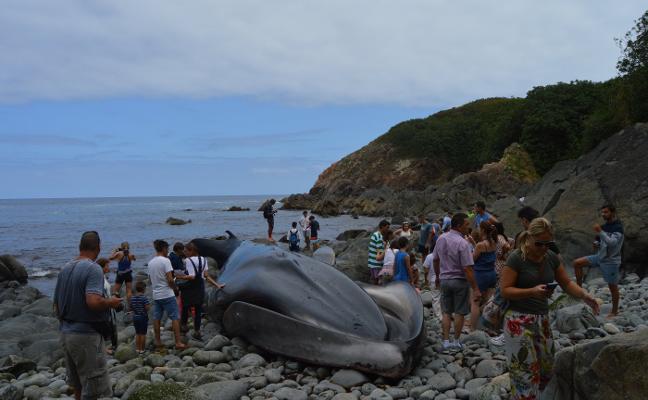 Tapia, Valdés y Navia pelearán por hacerse con el esqueleto de la ballena