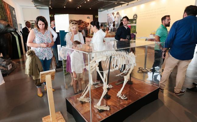 La muestra 'Vivir con osos' cerró con más de 35.000 visitas