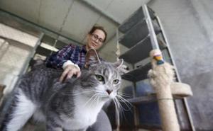 'Elena', la gata a por la que nadie volvió en Olloniego, ya ha sido adoptada