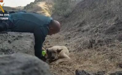 La desoladora imagen de un perro deshidratado en el incendio de Gran Canaria