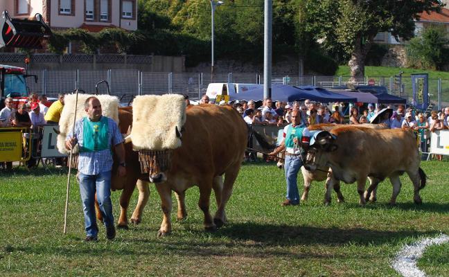 La Feria de Ganado abre el domingo con cerca de medio millar de reses