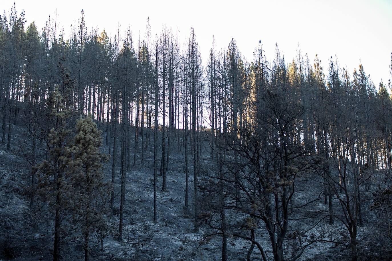 Vuelven a sus casas 4.500 vecinos desalojados por el incendio de Gran Canaria