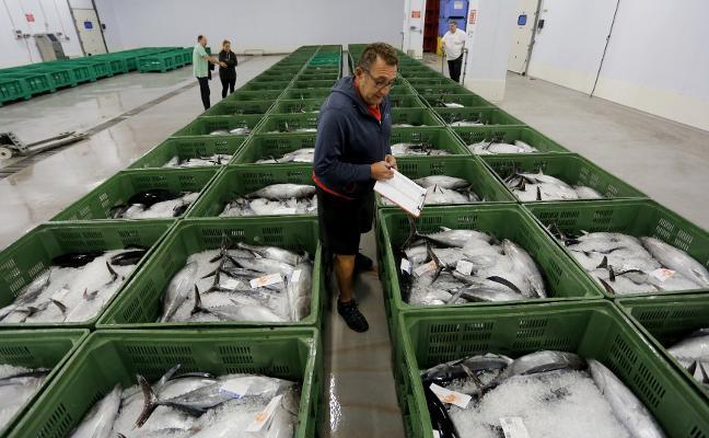 Los pescadores quieren reorganizar la captura del bonito para alargar la costera