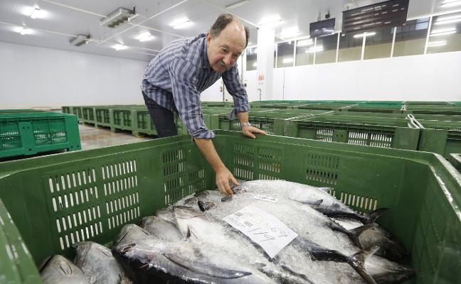 Rulados los últimos 20.500 kilos de bonito entre críticas por el fin de la costera