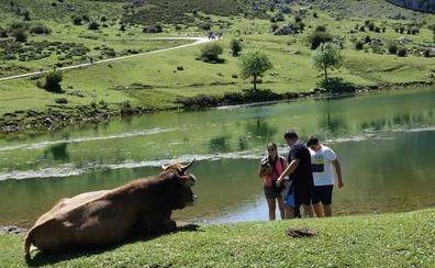 Diez rutas con niños en Asturias que no te puedes perder