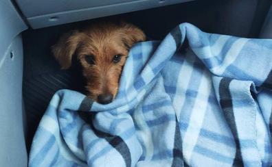 Rescatan a la perra 'Xana' en un acantilado de Candás tras una semana perdida