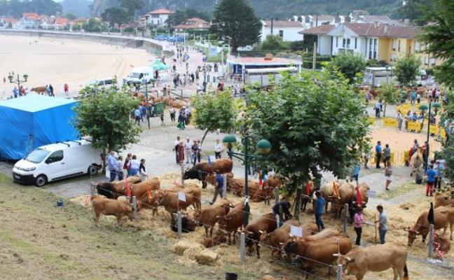 Cuarenta ganaderías participan este domingo en el concurso de la playa de Ribadesella