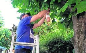 Vecinos de Mieres piden drones contra la avispa asiática