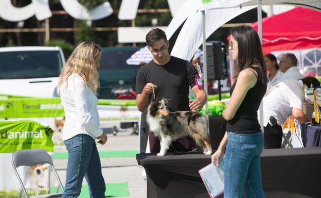 Los mejores canes se pasean y compiten en ParqueAstur