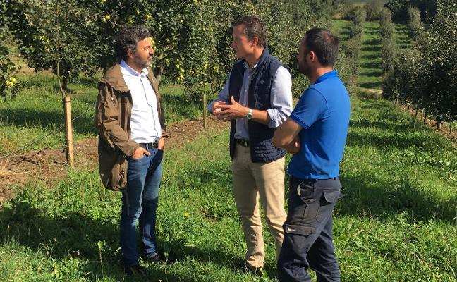 «Puede ser una cosecha de manzana asturiana histórica»