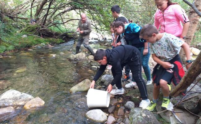 20.000 nuevos alevines de salmón para el río Somiedo