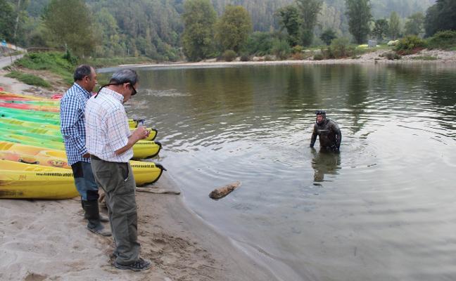 Los salmones aumentan en el Sella