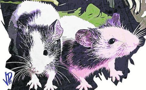 Cuando los tribunales asturianos condenaron a los ratones al exilio