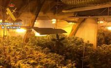 Detenida una pareja en Valdés a la que se les incautaron 400 plantas de marihuana