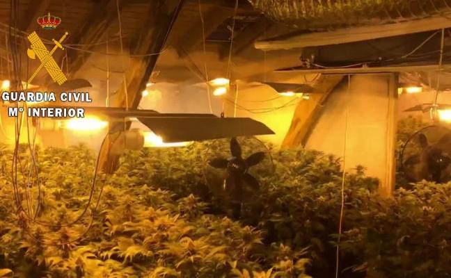 Detenidas dos personas en Valdés con más de 400 plantas de marihuana