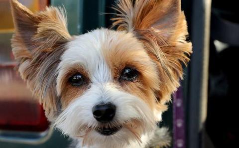 Australia multará a los dueños de perros que no los paseen una vez al día