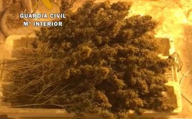 La Guardia Civil detiene a cinco personas e interviene 1.500 plantas de marihuana en el Occidente