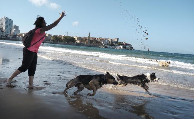 Los perros retornan a la playa de San Lorenzo