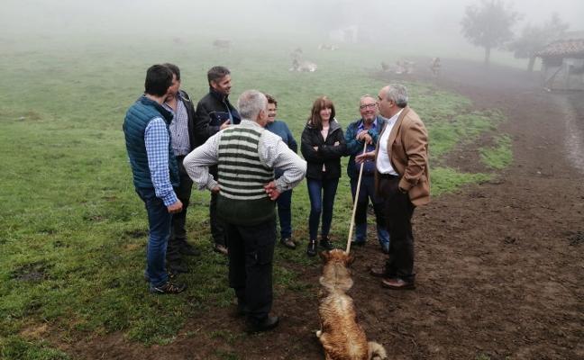 El PP pide declarar Picos como «zona libre de lobo»