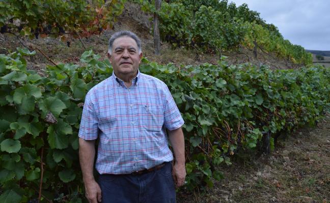 'Antón Chicote', el último en Cangas en vendimiar, prevé producir 10.000 botellas
