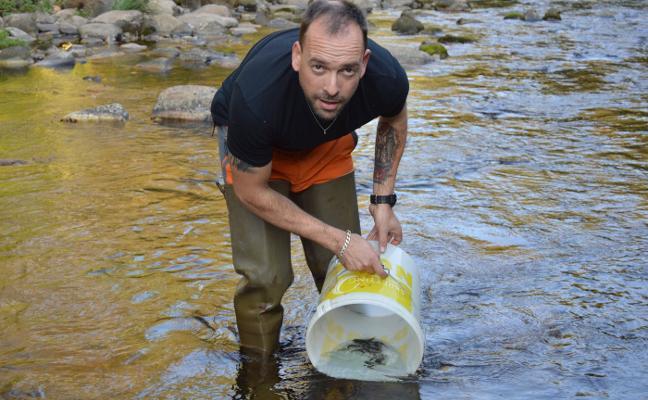 El Principado estudiará la supervivencia del salmón de repoblación del Narcea