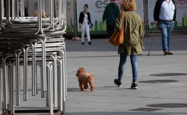 La nueva ordenanza de animales prohibirá los perros sueltos en las calles de Avilés