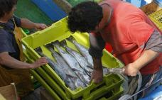 El aumento de las capturas de merluza salva las cifras de la lonja en septiembre