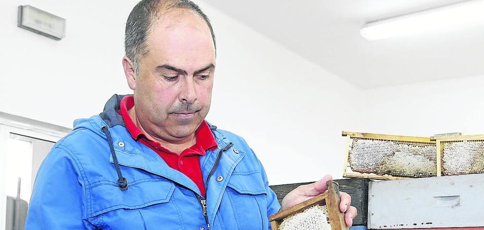 «Es importante para el sector apícola asturiano mantener los precios altos»