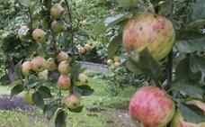 Villaviciosa rinde culto a la manzana