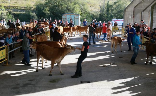 Les Feries de Pola de Lena celebran su certamen ganadero
