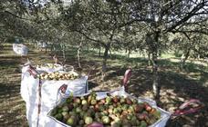 Cosecha récord de manzana en Asturias