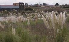 El plumero de la Pampa se extiende y ya llega a los Picos
