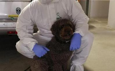 Muere 'Marley', el perro de la Guardia Civil que ayudó a resolver el crimen de Ardines