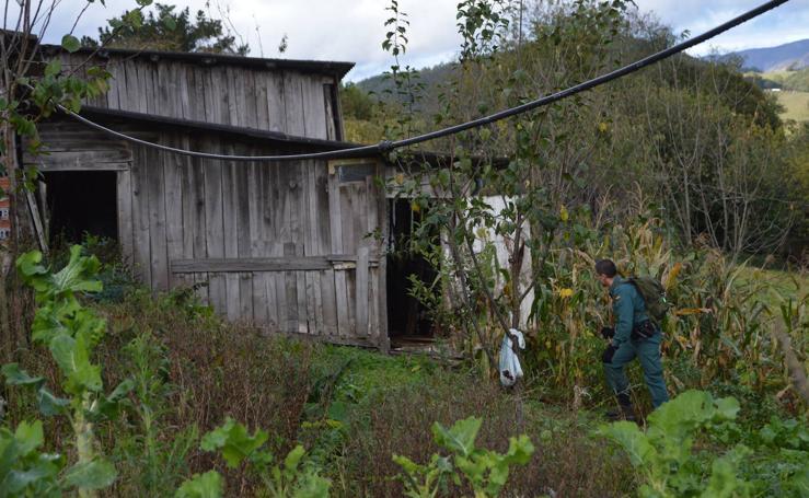 Dispositivo de búsqueda en Tineo para encontrar a un hombre de 86 años que salió el martes a buscar castañas