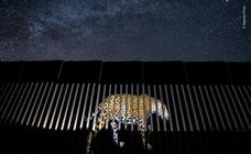 Los 19 ganadores del certamen 'Wildlife photographer of the year'
