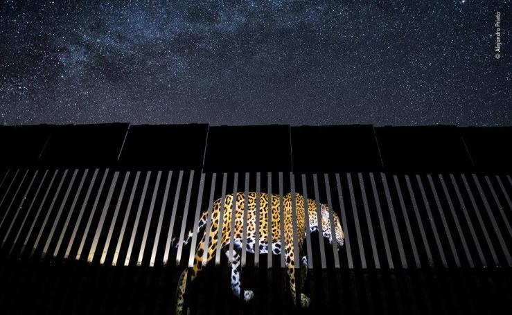 Los 19 ganadores del certamen 'Wildlife photographer of the year'